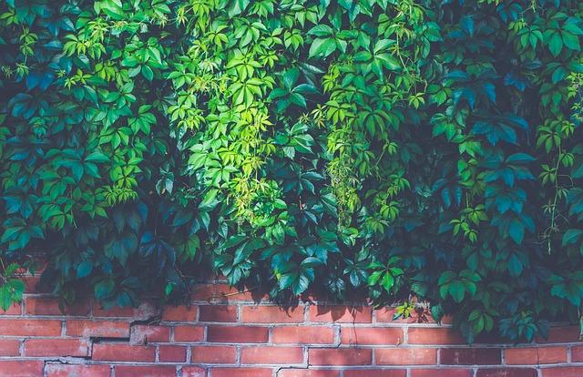 zielona ściana w domu